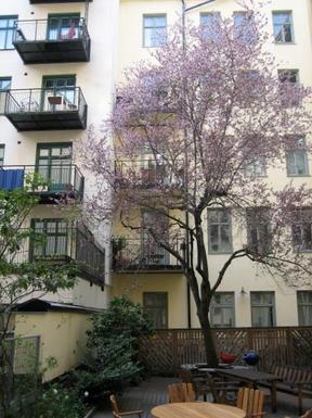 BoligBytte til,Sweden,Stockholm, Vasastan,Courtyard in spring