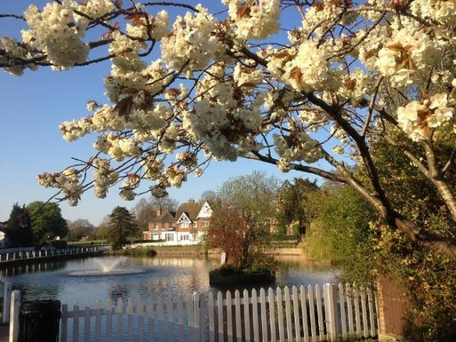 Lindfield pond, 5 mins walk