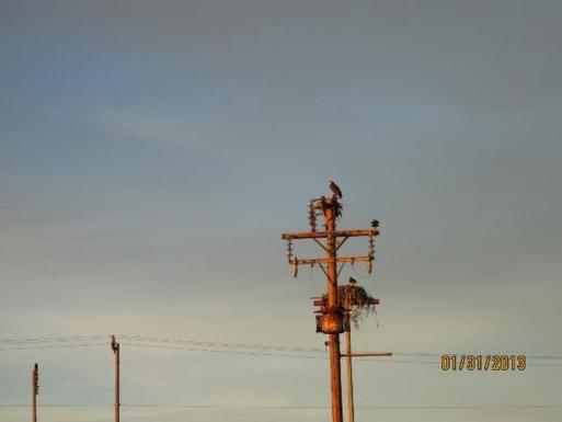 BoligBytte til,Mexico,Puerto Penasco,Nesting Osprey near  the  house  in  both  directi