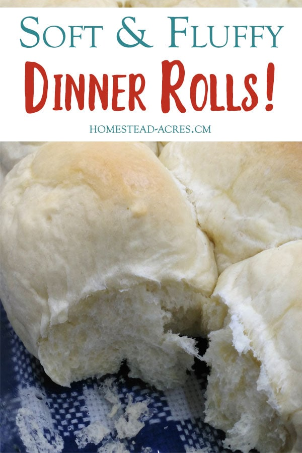 Best Ever Light And Fluffy Dinner Rolls