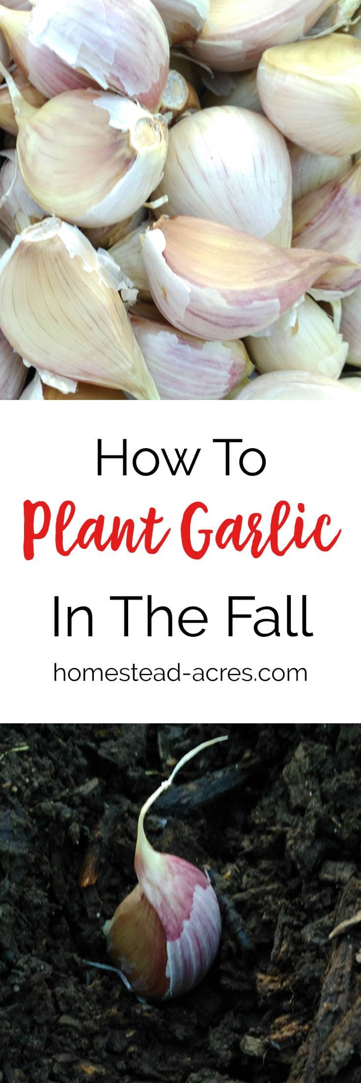 Growing Garlic. How to plant garlic in the fall. Garlic is a must have kitchen staple in our home! Growing garlic is so easy to do and doesn't need a lot of space. Click here to see how to grow your own garlic. #growinggarlic #gardening #garlic #plantinggarlic