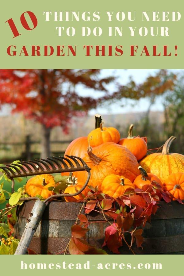 Preparing Garden For Fall