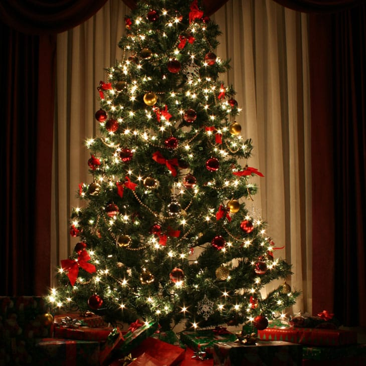 How to make your Christmas tree last longer - How To Make Your Own Christmas Tree Preservative Safe & Non Toxic