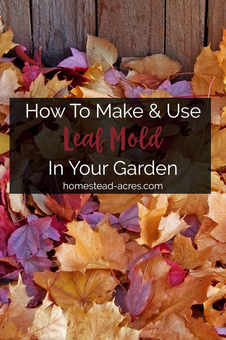 How to make leaf mold. 3 easy ways to make leaf mold and tips for using leaf mold in your garden. #composting #gardening #homesteading