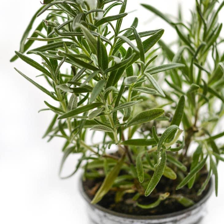 Growing Herbs Winter Inside In The Winter