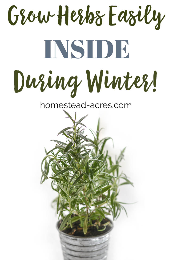 I love growing herbs indoors in the winter! Save money by growing your own herbs indoors. Check out these 5 easy to grow herbs and tips for beginners. #growingherbs #growingherbsindoors #gardening  #growyourown