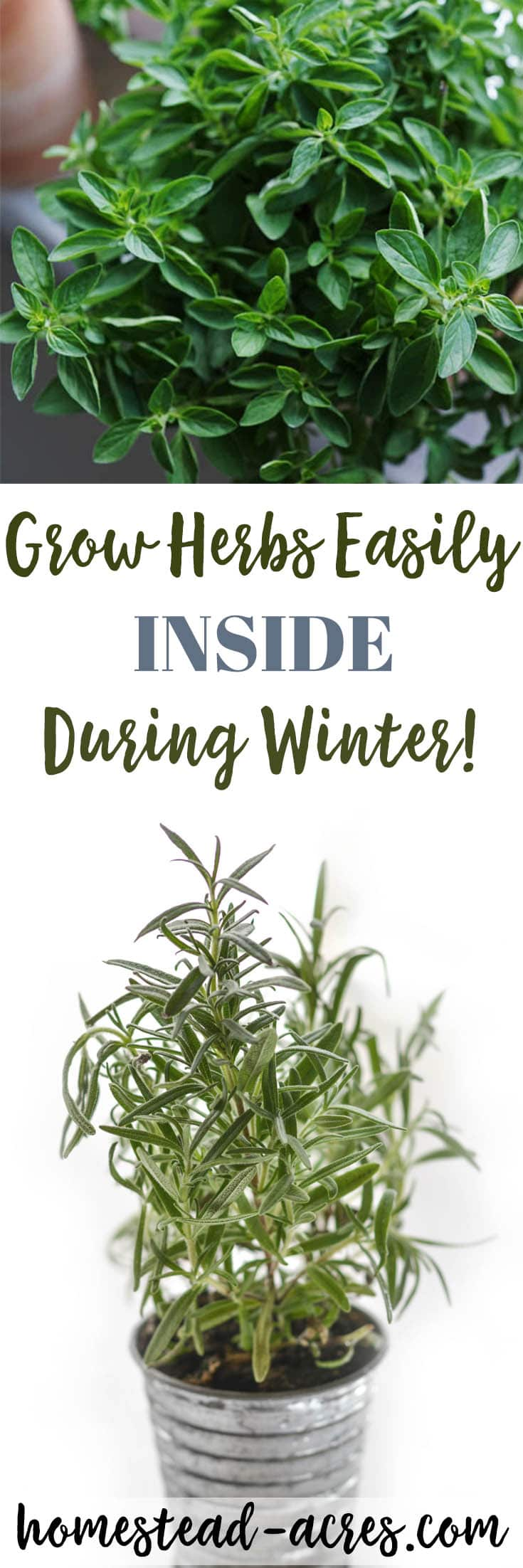 Indoor Herb Garden Winter Growing herbs indoors tips for growing herbs indoors in the winter 5 easy to grow herbs indoors fight the winter blues and save money at the workwithnaturefo