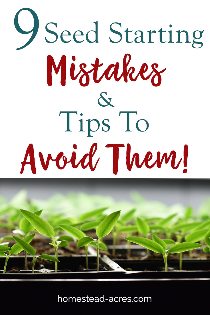 Starting seeds indoors is a fun way to save money and get a head start on your growing season. But there are 9 common seed starting mistakes made by beginner gardeners that can ruin your seedlings. Learn how to to avoid these seed starting problems and grow a thriving garden with these easy tips. #gardening #seedstarting #homesteading