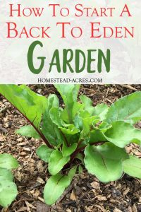 Back to Eden gardening has totally changed how we garden!! I love this method so much, no tilling, almost no weeding or watering it makes gardening easy. It's a great way to grow lots of vegetables in your backyard garden even for beginners. Check out these tips for making your Back to Eden garden a success!