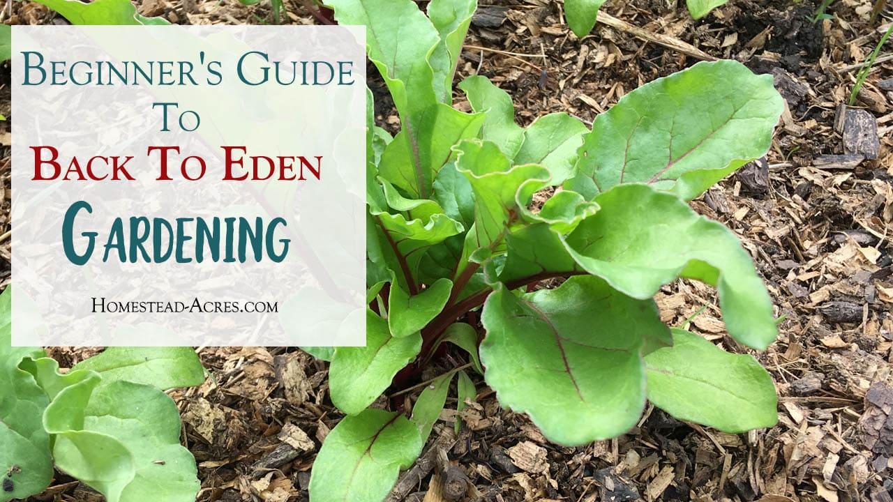 Beginner 39 S Guide To Back To Eden Gardening Homestead Acres