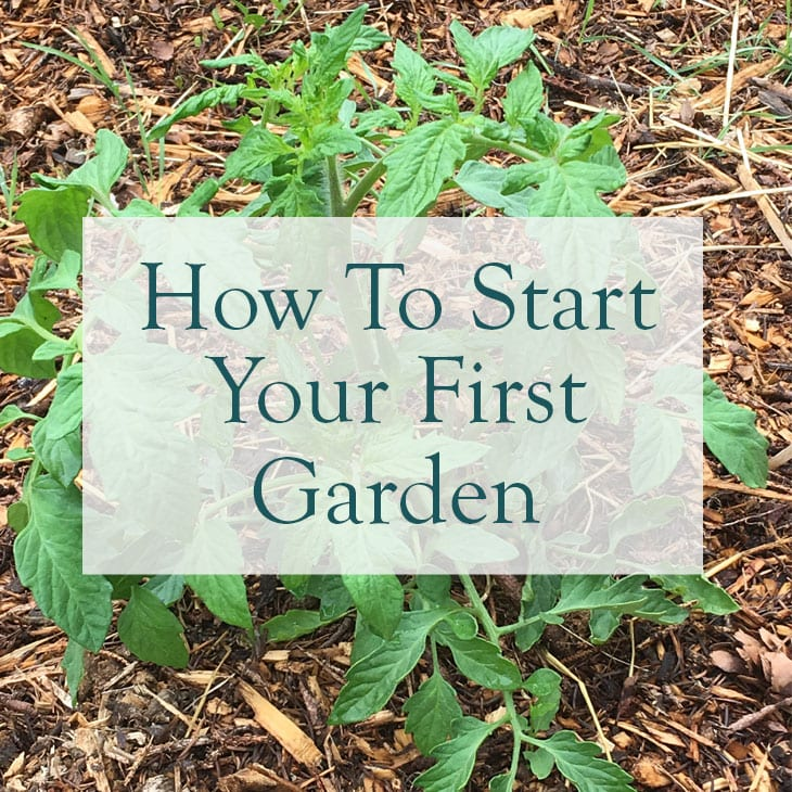 How To Start A Garden, overlaid on a tomato plant photo.