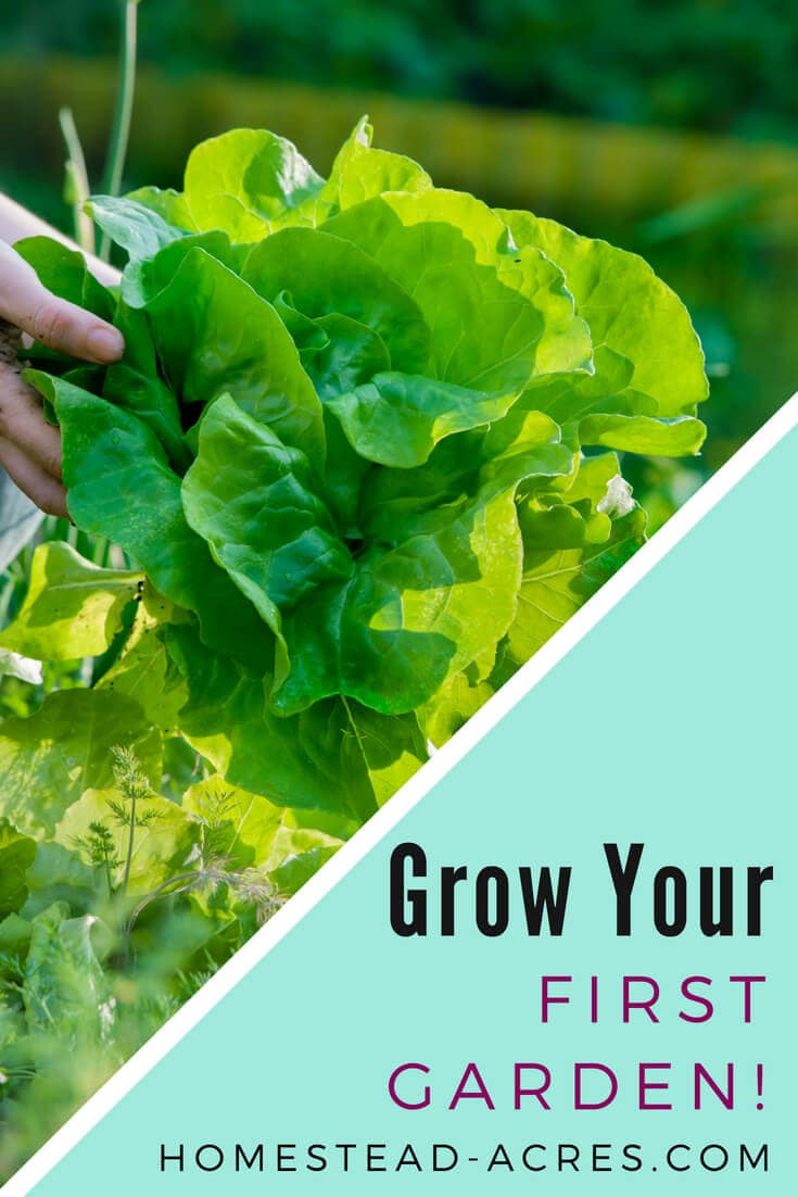 How To Start Your First Vegetable Garden