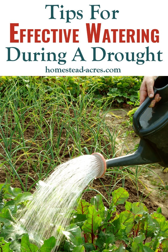 Tips For Effective Watering During A Drought