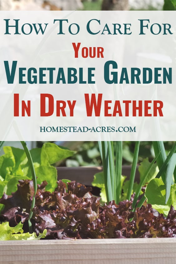 Caring For Vegetable Garden In Dry Weather