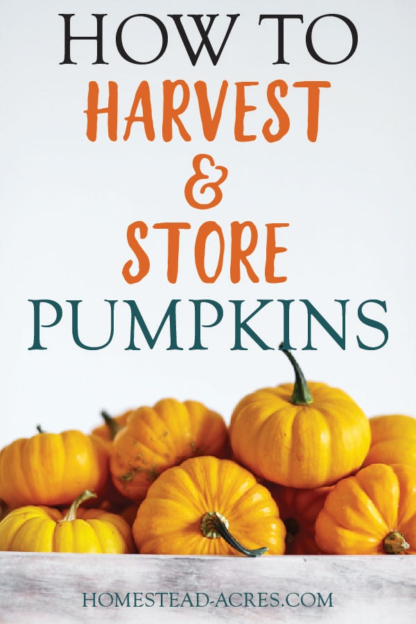 How To Harvest And Store Pumpkins