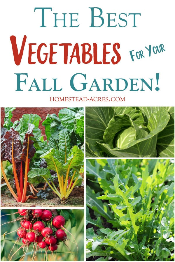 The Best Vegetables For Your Fall Garden