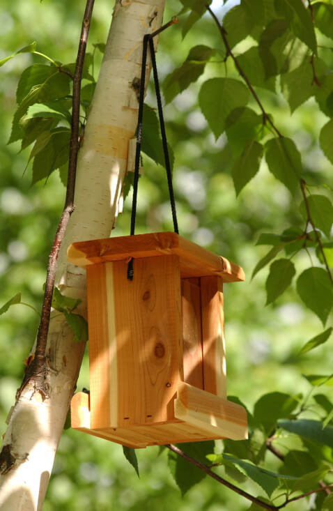 Extremely simple wooden bird house hanging from a small tree branch.