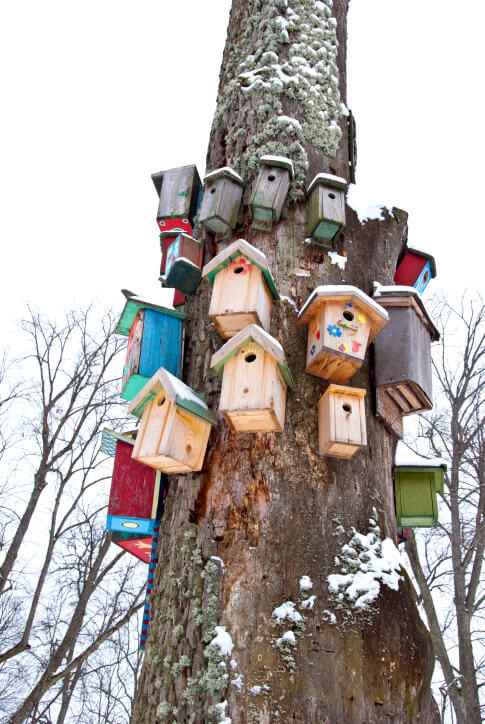 Large cluster of bird houses attached and climbing up a large tree trunk.