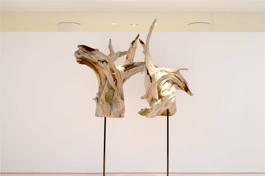 Simple white wall highlighting driftwood sculptures.