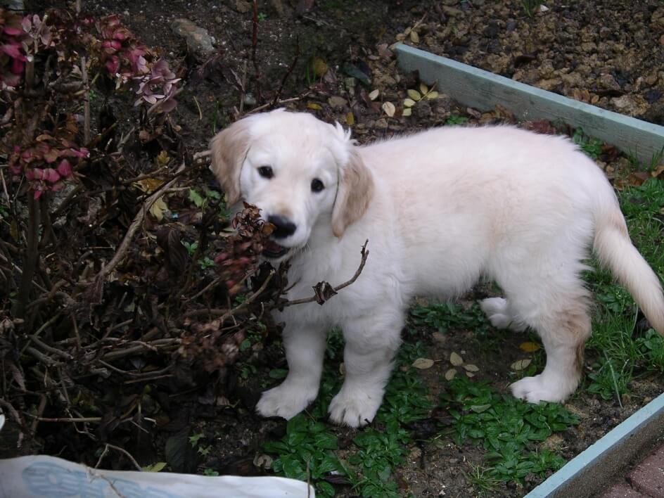 Cute puppy in the garden