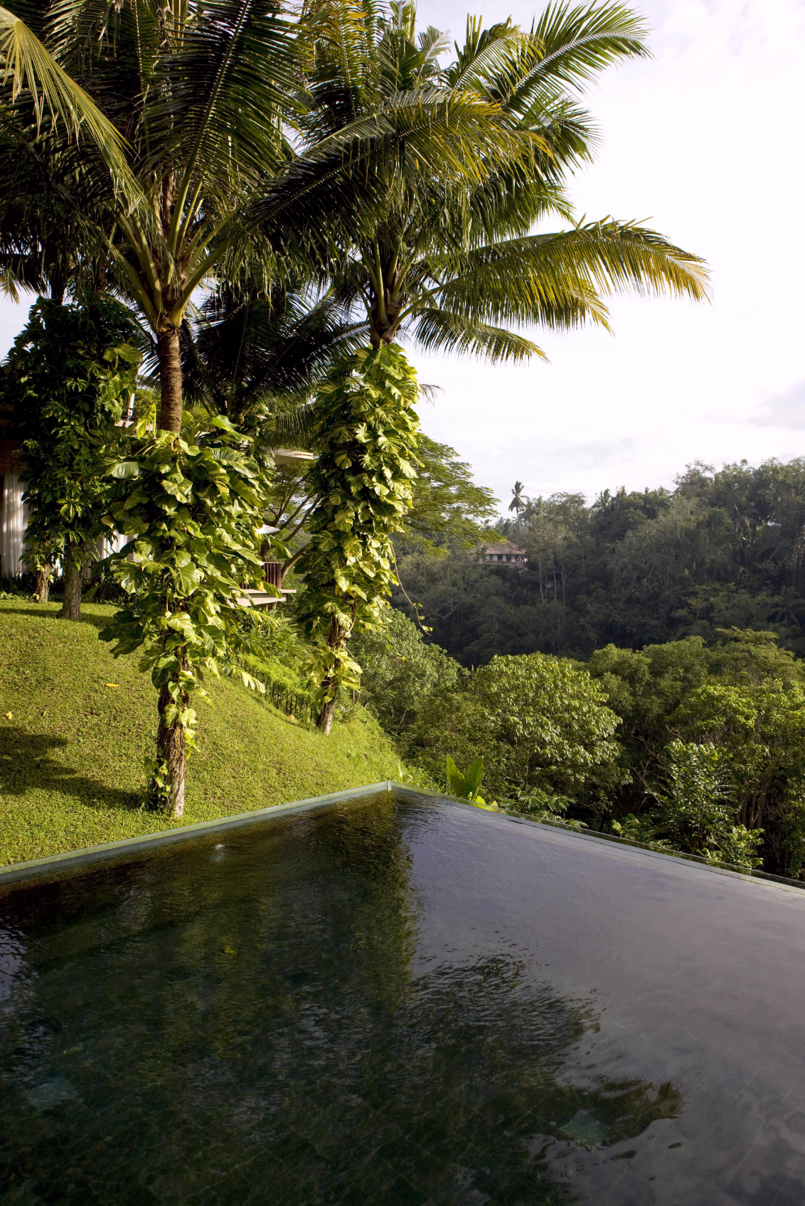 This pool is situated on the edge of a sharp drop-off into the tropical forest below. The hilly, forested landscape gives the pool a fantastic view.