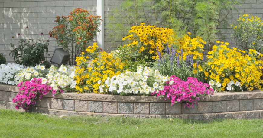 A simple retaining wall that creates a raised gardening plot filled with petunias, black-eyed susans, and other members of the daisy family.