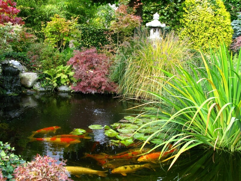 A large pond in a Japanese garden with thick plants growing right up to the water's edge. The pond is populated by huge koi fish.