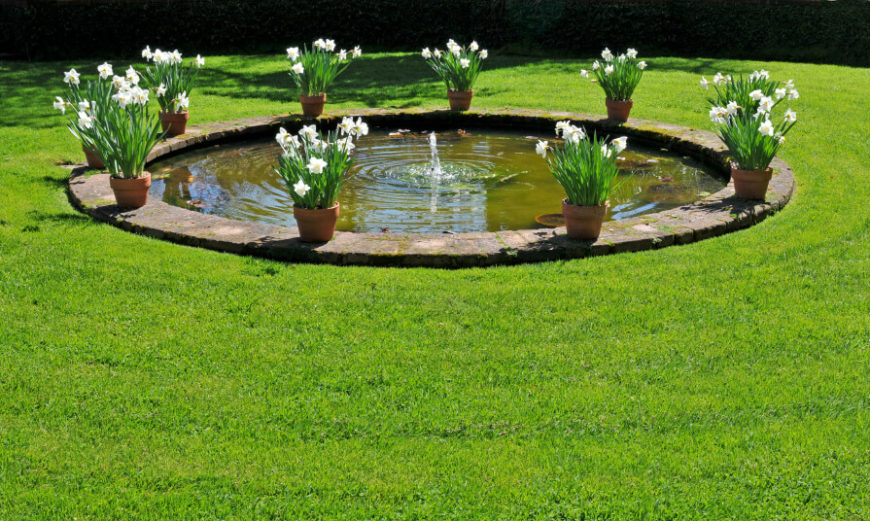 A circular garden pond in the center of a manicured lawn. Planters full of white daffodils are placed equal distances apart around the perimeter of the pond.