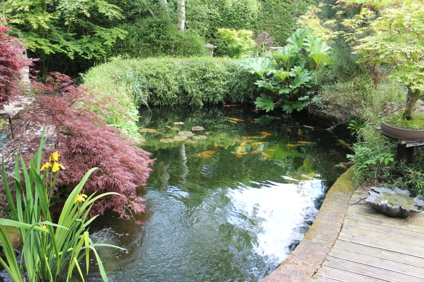 60 backyard pond ideas photos for Koi fish pond garden design ideas