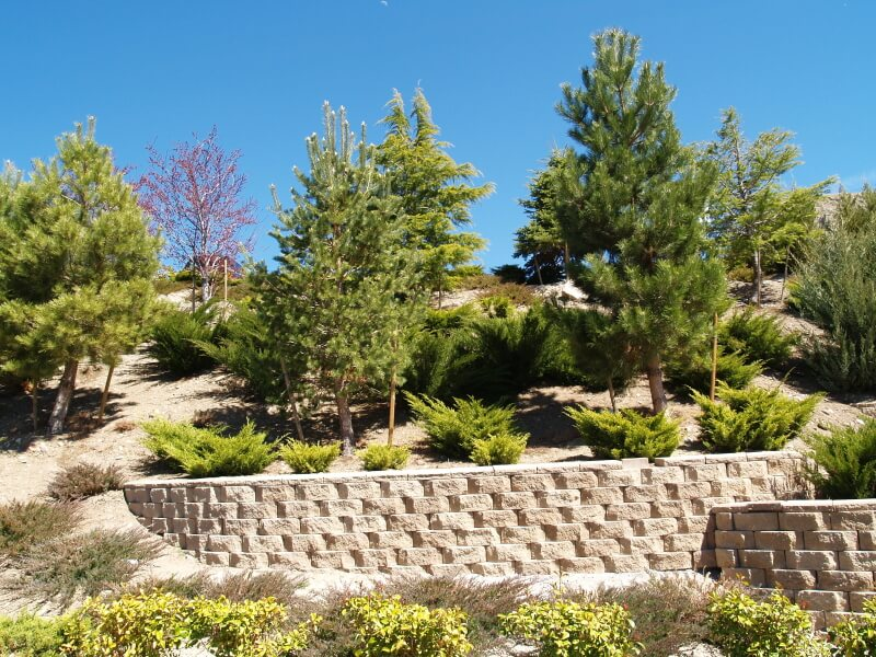 A series of light stone retaining walls that help keep the sand dunes from eroding away and also provide a sturdy place for larger evergreens to grow.