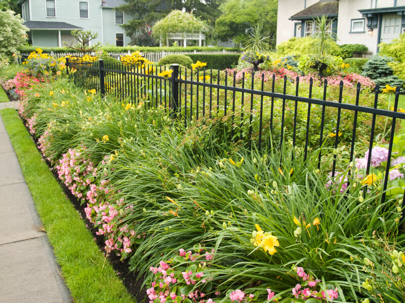 A long, thin wrought-iron fence with thick landscaping both in front of and behind it. Featured are beautiful full daylilies.