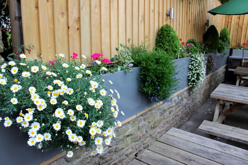 A short stone wall with a tall gray concrete planter on the top. Behind that is a taller wood privacy fence. Daisies and other flowering plants spill out of the planter.