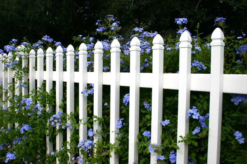 A basic white aluminum fence with an enormous flowering shrub running along the length with tiny purple flowers.