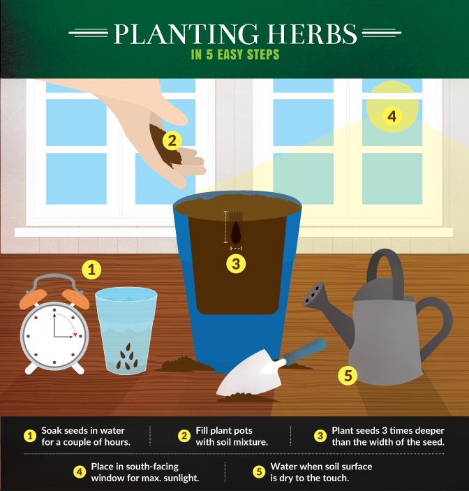 Planting Herbs in 5 Easy Steps