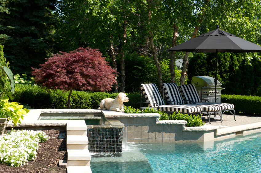 A pool with a contemporary waterfall in stone and glass mosaic tiles in the corner near the landscaped hedges. To the right are lounge chairs and a grill.