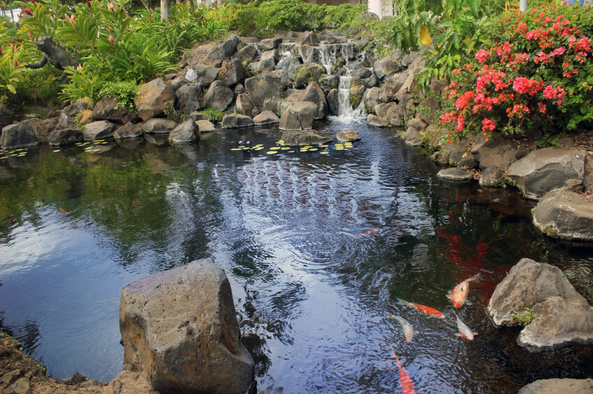 A large koi pond with a man-made waterfall created with natural, large stones.