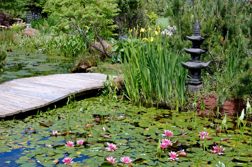A simple, low footbridge crosses a still lily-filled pond in a Japanese Zen garden.