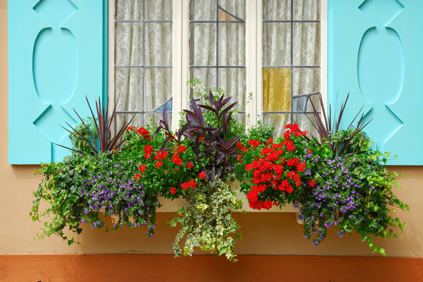 A simple beige window box overflowing with vines, flowers, and other colorful plants beneath freshly painted sky blue shutters. Small portions of the window are stained glass.