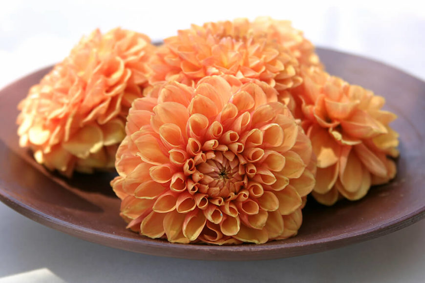 This simple, chic centerpiece consists of several light orange chrysanthemum blossoms grouped together on a wooden plate.