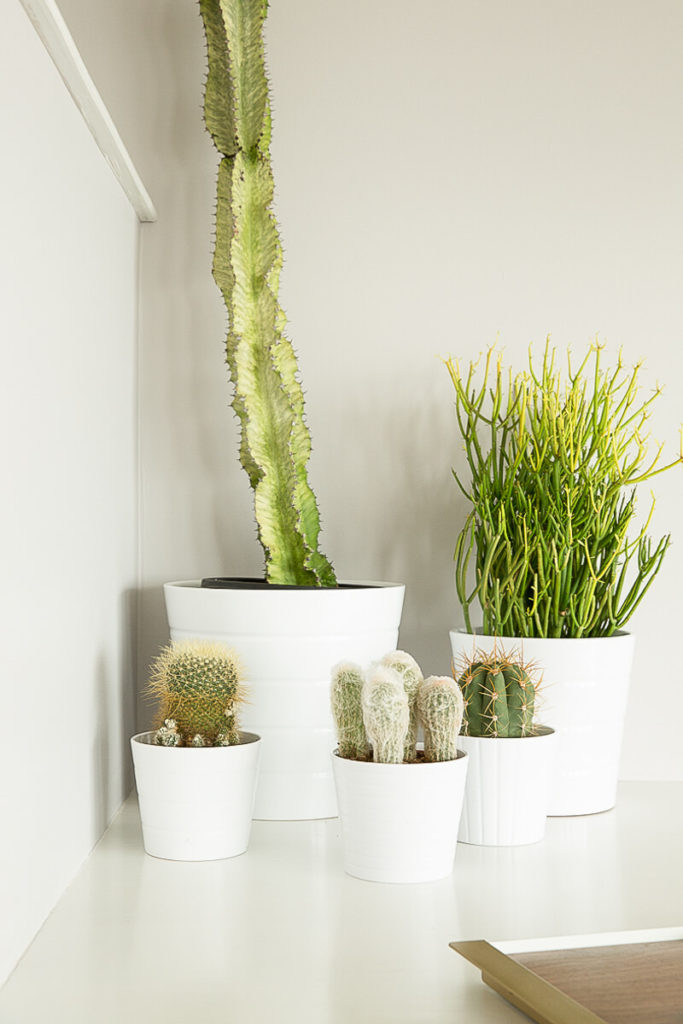 This close-up view of the variety of potted cacti that adorn one of the lower shelves showcases the mix between organic and inorganic elements in this home.