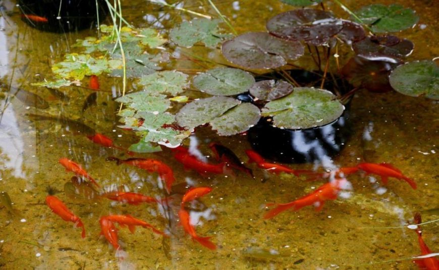 The water feature includes a full koi pond, seen here with natural lilies floating.