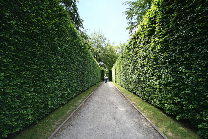 These tall, imposing hedges add a sense of privacy and calm to this narrow pathway.