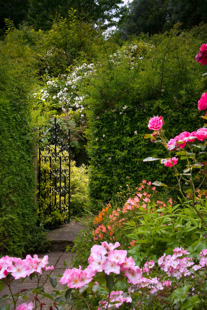 Choosing to use a denser, leafier bush for these hedges adds a definite sense of privacy to the small garden. The addition of the wrought iron fence adds a classical touch to the imposing hedge.