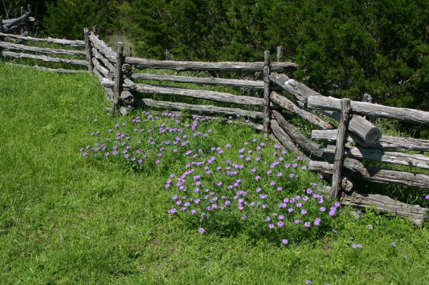 A more traditional split rail fence with the characteristic zig-zagging silhouette. This is a more common agricultural fence, seen here marking the boundary of a bright green meadow with lovely lavender thistle.