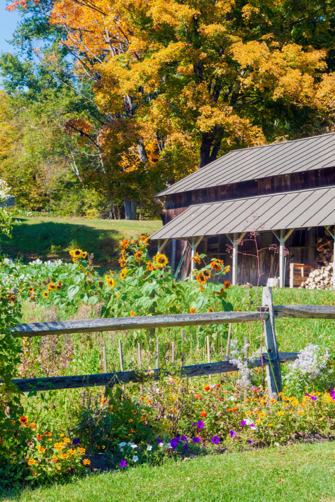 Another lovely wooden cabin-like structure with a low metal roof. A split rail fence runs along this home's garden, which is rich in color and texture, including small ground cover perennials and tall, bold sunflowers.