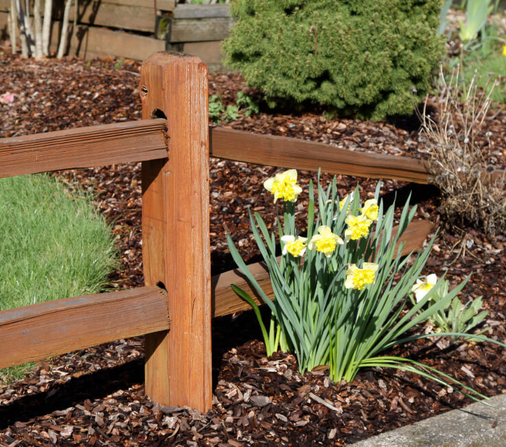 A beautiful cedar mortised fence that descends into a bark-filled planting bed punctuated with lovely yellow daffodils.