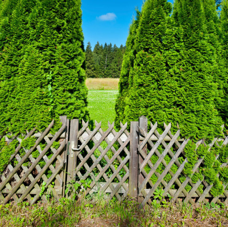 This rough lattice fence has a nice unfinished rustic look.