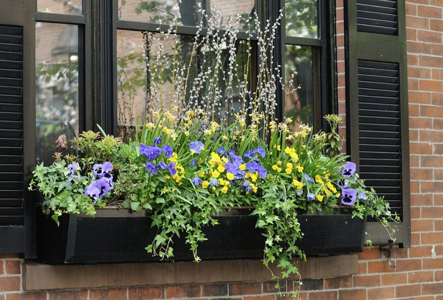 This is a simple black window box overflowing with trailing vines, brightly colored flowers, and some taller plants for texture and height.