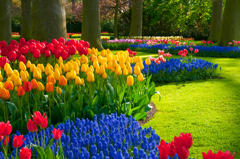 Tulips come in incredibly bright colors, and when paired with smaller flowers that are just as vibrant, create a blanket of beauty that has few rivals.