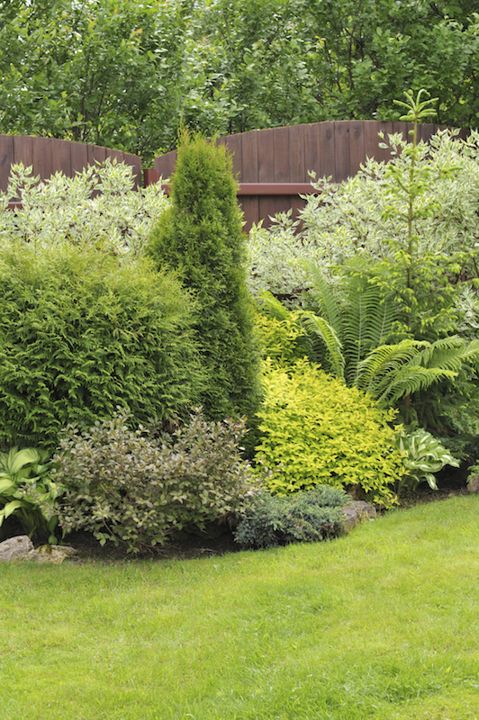 Just like with flowers, shrubs and bushes come in so many different textures, heights and shades that you can create a varied display easily.